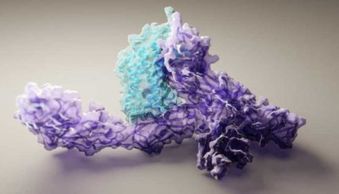 Proteins model